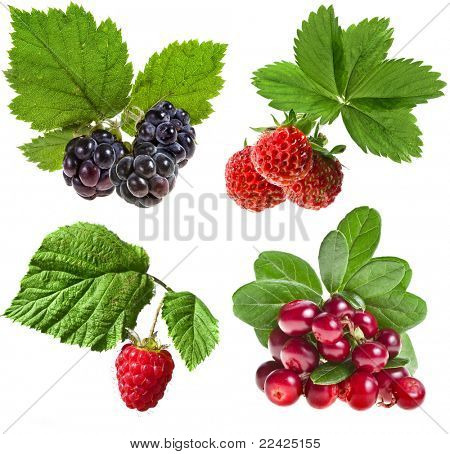 collection of forest berries isolated on a white