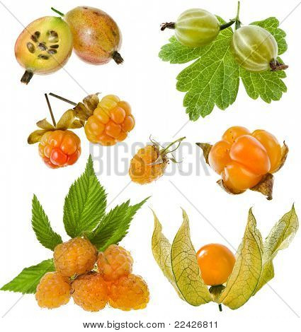 sweet yellow  berries : gooseberry, cloudberry, raspberry,physalis   isolated on white