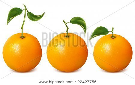 Ripe oranges with leaves. Raster version.