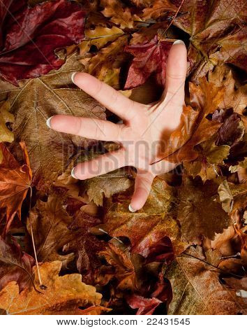 Desperate hand sinking in the ground covered with autumn leaves
