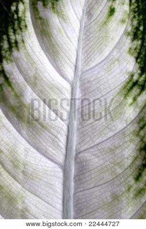 camille leaf