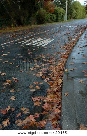 Fallen Leaves On Street
