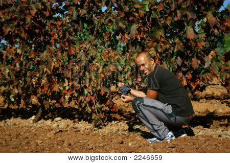 Vineyards Farmer