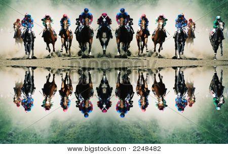 Cavalos.