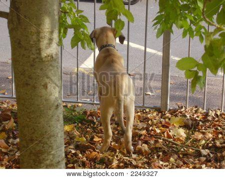 Caged Puppy