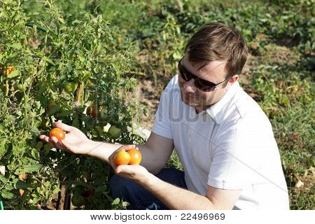 Man Holds Tomatoes