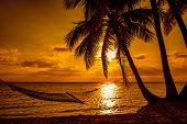Silhouette of hammock and palm trees on a tropical beach at sunset, Fiji Islands poster