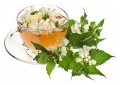 stock photo of dandruff  - Herbal tea with flowers nettle on white background - JPG