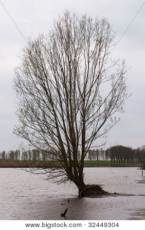 Tree In A Flooded Polder Landscape