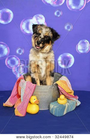 Aussie Puppy in a Tub