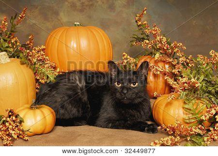 Black Ca, Pumpkins, and Bittersweet