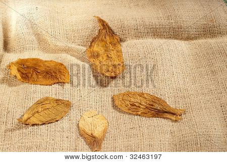 Leaves On A Bag
