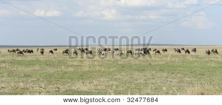 Panoramic View With Serengeti Animals