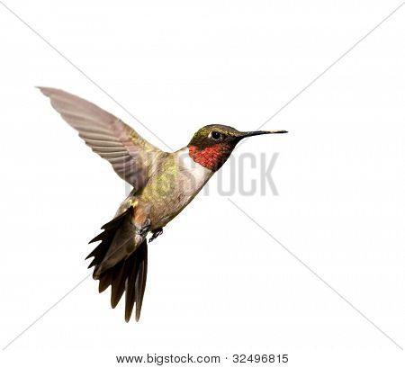 Ruby-throated Hummingbird male in flight; isolated on white