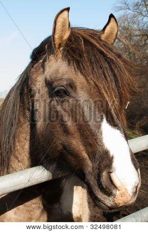 Retrato de un caballo marrón