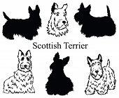 Scottish Terrier Set. Collection Of Pedigree Dogs. Black White Illustration Of A Scottish Terrier Do poster