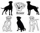 Boxer Set. Collection Of Pedigree Dogs. Black White Illustration Of A Boxer Dog. Vector Drawing Of A poster