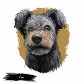 Pumi Dog Portrait Isolated On White. Digital Art Illustration Of Hand Drawn Dog For Web, T-shirt Pri poster