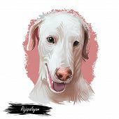 Rajapalayam Dog Portrait Isolated On White. Digital Art Illustration Of Hand Drawn Dog For Web, T-sh poster