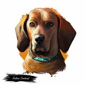 Redbone Coonhound Dog Portrait Isolated On White. Digital Art Illustration Of Hand Drawn Dog For Web poster