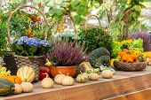 Ripe Pumpkins Of Different Varieties, Flowering Hydrangea, Heather, Chrysanthemum In Clay Pots On A  poster