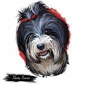 Tibetan Terrier, Tsang Or Dokhi Apso Dog Breed Portrait Isolated On White. Digital Art Illustration, poster