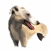 English Whippet Or Snap Dog Breed Portrait Isolated On White. Digital Art Illustration, Animal Water poster
