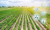 Scientific Work And Development Of Agriculture. High Technologies And Innovations In Agro-industry.  poster