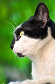 Cats, Alley Cats, Stray Cats Black And White Stray Cat In The Street Of Close Up poster