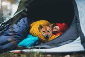 Girl Hug Resting Dog Together In Forest Campsite,  Red Shiba Inu Traveler Sleeping In Camp Tent , Hi poster