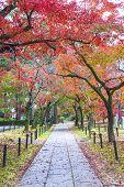 Idyllic Landscape Of Kyoto, Japan In Autumn Season poster