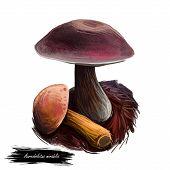 Aureoboletus Mirabilis Mushroom Digital Art Illustration. Velvet Top Vegetable With Thick Steam And  poster