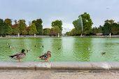 Tuileries Gardens In Central Paris poster