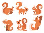 Cute Squirrel. Zoo Little Forest Animals In Action Poses Wildlife Squirrel Vector Cartoon Character. poster