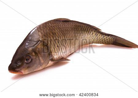 Fish A Carp
