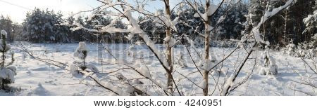 Snowbound Branch On Sunny Day.