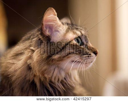 Head Cat portrait facial profile