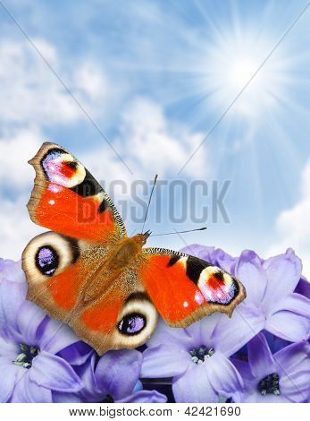 Spring blossom and a butterfly against sunny sky , natural background - close up with shallow DOF.