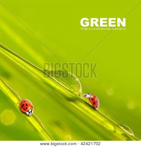 Fresh grass and little ladybugs, natural background. Picture with space for your text.