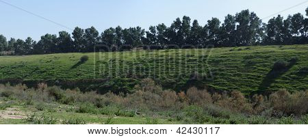 Counterlight view of a green hill covered with grass and bushes