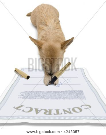 Dog - Signing Contract