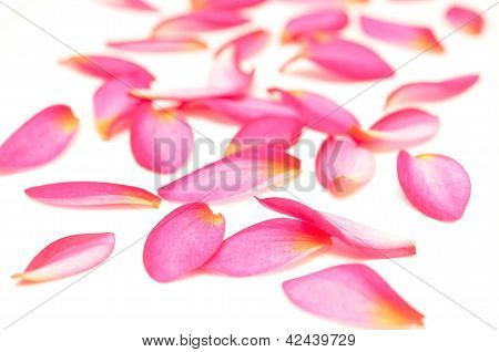 beauty petals