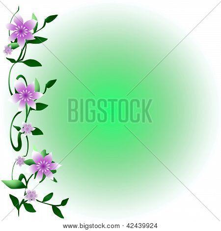 soft flowering vine