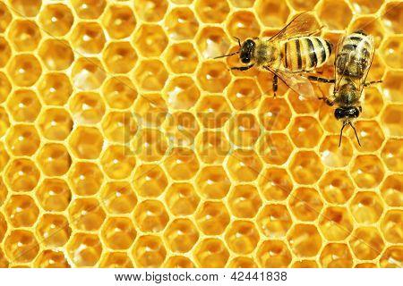 Abelhas trabalhando em células de mel.