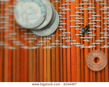 Fly And Coins