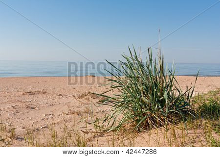 green bush on sands on sea