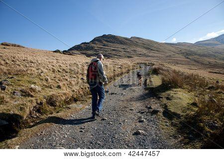 Dog Walker, Snowdon.