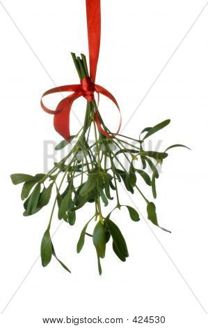 Mistletoe - Close Up
