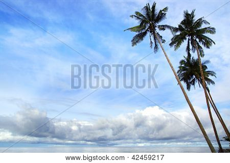 Tropical landscape with palm trees.