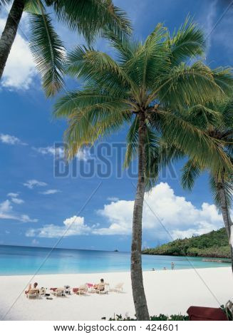 Palm Tree praia